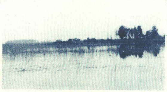 1909 Witness Trees, Rice Lake's Highest Spot